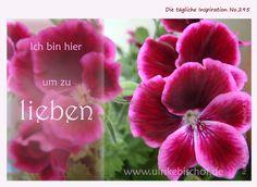 Die tägliche Inspiration No.295  www.inspirationenblog.wordpress.com  www.ulrikebischof.de