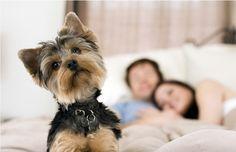 Votre chien, votre nouveau Cupidon  https://fr.chabadog.com/mag/document/VZPXQyAAAB0Amc_K/votre-chien-votre-nouveau-cupidon/