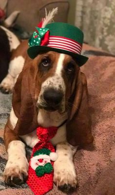 Basset Puppies, Hound Puppies, Basset Hound Dog, Merry Christmas Dog, Christmas Animals, Xmas, Happy Pictures, Happy Pics, Bassett Hound