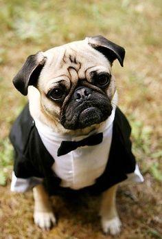 The leader of the Pug Mafia