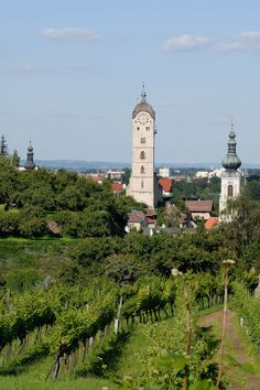 Wachau Valley, Austria's best wine region - Don't miss it while attending the World Congress of #musictherapy 2014 in Austria #WCMT2014 http://wcmt2014.wordpress.com