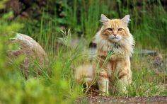 Image from http://wallpapers55.com/wp-content/uploads/2013/11/wild-cat-waiting.jpg.