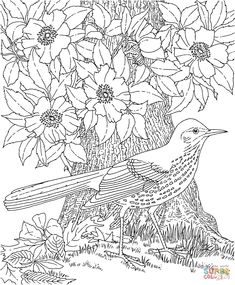 Click The Brown Thrasher And Cherokee Rose Georgia Bird Flower Coloring Pages