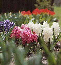Hyacinth are so beautiful!