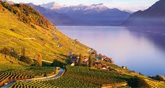 Lake Geneva is in the French-speaking part of beautiful Western Switzerland. As winter gets closer, we are highlighting 7 reasons to love Lake Geneva. Vevey, Lake Geneva Switzerland, Best Of Switzerland, Switzerland Tourism, Lausanne, Zermatt, Week End Camping, Camping Car, Grindelwald