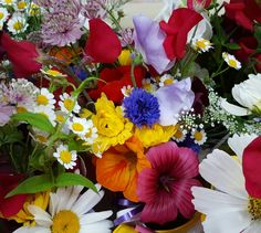 Close up of summer florals from the farm. Divine scents too. Uplifting colours for the soul.