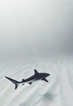 Sea Life l Animal Photography Beautiful Creatures, Animals Beautiful, Cute Animals, Underwater Photography, Animal Photography, Photography Tips, Photography Aesthetic, Shark Tattoos, Wale