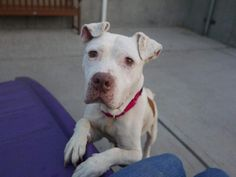 NOVA - A1121200 - - Brooklyn  TO BE DESTROYED 08/11/17 **ON PUBLIC LIST** -  Click for info & Current Status: http://nycdogs.urgentpodr.org/nova-a1121200/