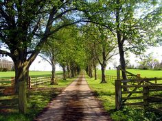 Private Road to Pitt House Farm - This is what I've always dreamed of. Farm Entrance, Driveway Entrance, Tree Lined Driveway, Farm Gate, Long Driveways, Driveway Landscaping, Beautiful Farm, Fantasy Landscape, Horse Farms
