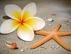 A plumieria and a starfish! I waaaant for a tattoo!!!