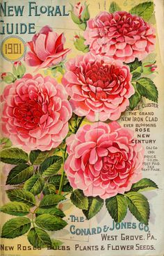 The Conard and Jones Co. - New floral guide : 1901