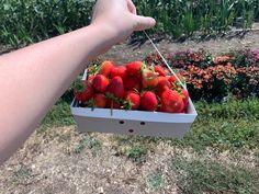 Food Box, Recipe Box, Strawberry, Fruit, Strawberry Fruit, Strawberries, Strawberry Plant