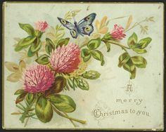 https://flic.kr/p/yZSoyw   A merry Christmas to you. [To] George Shaw, Xmas 87 [1887]   Christmas greeting card printed only on the front shows pink clover flowers and leaves, with a blue butterfly hovering over them. Text is at lower right. The card is gilt-edged. Quantity: 1 colour art print(s). Physical Description: Chromolithograph, on card 95 x 120 mm.    Shaw, George, d 1915. A merry Christmas to you. [To] George Shaw, Xmas 87 [1887]. [Postcards and greeting cards collected by Mrs…