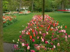 Photos of Jacqueline van der Kloets gardens around the world, showing her artful mix of fall bulbs in bloom in public gardens in New York and Holland and at her home.nbsp; {love the bleeding hearts and the rhythm they add!)
