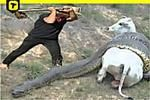 Human Save Pregnant Cow from Giant Anaconda Attack. Download TopBuzz to explore what's trending everyday!