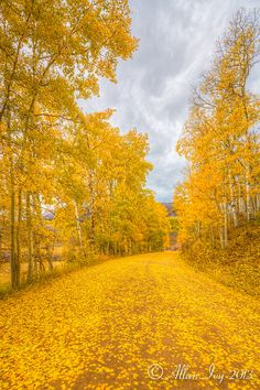 Beautiful Roads, Beautiful Landscapes, Beautiful Places, Landscape Photography, Nature Photography, Colorado, Yellow Fields, Autumn Scenery, October Country