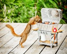 Adorable Pictures Capture The Life Of A Squirrel - DesignTAXI.com