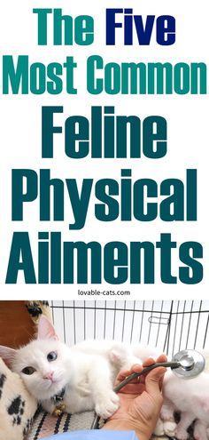 The Five Most Common Feline Physical Ailments Zoo Animals, Funny Animals, Cute Animals, Beautiful Cats, Animals Beautiful, Cat Toilet Training, The Five, Most Common, Guinness World