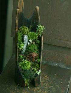 moss bonsai on driftwood Succulents Garden, Garden Plants, House Plants, Planting Flowers, Jardin Zen Miniature, Moss Plant, Mini Zen Garden, Moss Terrarium, Terrarium Wedding