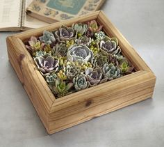 Live Succulent Garden, can stand vertically too | Pottery Barn