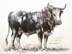 Contemporary South African Artist Erna Wade paints Nguni, wildlife and other African themes in Oils, Acrylic, Mixed Media and Watercolour African Theme, South African Artists, Watercolours, Watercolor Paintings, Moose Art, Wildlife, Birds, Paper, Animals