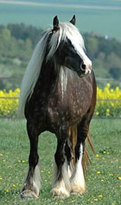 Gypsy Vanner Красивые Лошади, None, Фотографии Животных, Цыганская Лошадь, Тяжеловозы, Самые Милые Животные, Дикие, Щенки, Природа