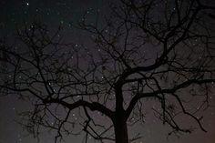 arbol iluminado de estrellas