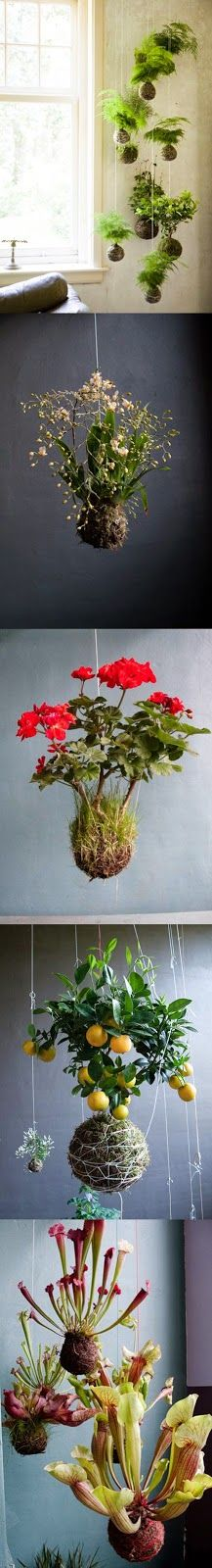 String Gardens Group... 5 most Beautiful things...