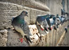 Pigeons On The Wall by Sadettin  Uysal on 500px