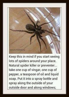 I know it's not a pet per-say; BUT Just in case: Natural Spider killer or preventer Do It Yourself Camper, Do It Yourself Baby, Cleaning Solutions, Cleaning Hacks, Pest Solutions, Natural Solutions, Cleaning Supplies, Cleaning Recipes, Handy Gadgets