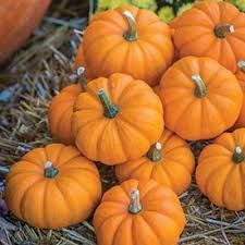 When you think of October, chances are you think of pumpkins! Whether as a fall-specific spice, a fun Jack O'Lantern craft, a tasty pie, or a festive decoration, pumpkins are synonymous with fall. So take that seasonal energy to your yoga mat with some pumpkin inspired games and activities! Mini Pumpkins, Five Little Pumpkins, Fall Pumpkins, Halloween Pumpkins, Burpee Seeds, Pumpkin Drawing, Pumpkin Jack, Burpees, Pumpkin Decorating