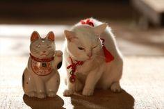 """TEMPORADA 2 Neko Zamurai"" característica foto! Gato amante agonía fotos inevitables embalados - Entretenimiento - manivela-en!"