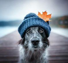 Hiking Dogs, G Adventures, Great Shots, Dog Photography, Dog Life, Dog Days, Dog Training, Dogs And Puppies, Dog Lovers