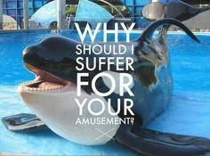 Educate yourselves about sea world and their ways of keeping these poor animals captive! Blackfish documentary!