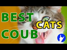 BEST FUNNY CATS IN COUB ПРИКОЛЬНЫЕ КОШКИ FUNNY ANIMALS #1 -  #animals #animal #pet #cat #cats #cute #pets #animales #tagsforlikes #catlover #funnycats Cats are the funniest animals on Earth, they make us laugh all the time! Just look how all these cats & kittens play, fail, get along with dogs, make funny sounds, get angry, sleep, … So... - #Cats