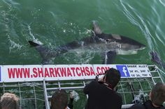 Shark cage diving in Gansbaai, South Africa with Marine Dynamics. Experience the exceptional and come face to face with a great white shark! Great White Shark Diving, Shark Cage, Adventure Activities, African Safari, South Africa, Tours, Cape Town, October