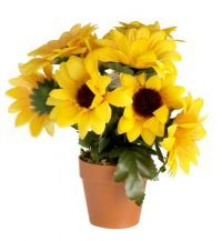 "£0.99 - Westwoods Decorative Sunflowers In A Pot  Approximately 8"" tall"