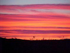 Enjoy a Flamingo sunset