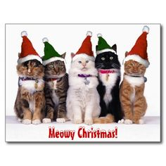 Meowy Christmas Customizable card on Zazzle.com Comments