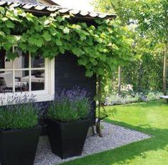 Villengarten an den Seen - green garden -
