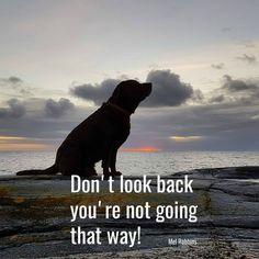 04.03.2017 til 03.04.2018 er 11 måneder og 1 dag. Mel Robbins, Dont Look Back, Looking Back, That Way, Dogs, Animals, Art, Don't Look Back, Animales