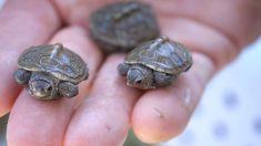 Resultado de imagen de turtle