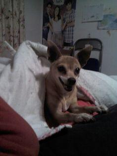 Mi perra sabe sonrreir.Jajaja