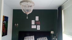 Histor Oregano green