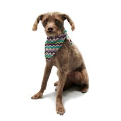 "Louise Machado ""Ethnic Color"" Teal Purple Pet Bandana"