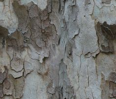 images+of+texture | Free High-Resolution Seamless Texture - Wood Bark | ester liquori ...