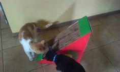 Los gatos de Leticia y su nuevo rascador