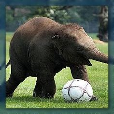 Baby #Elephant Plays Soccer, World Collectively Smiles