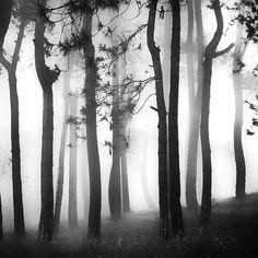 fog mist forest