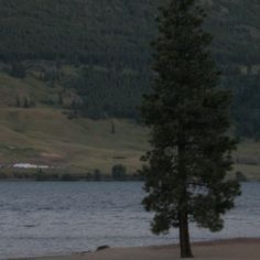 One of my favourite photos:  A pine tree at twilight on the shore of Nicola Lake near Merrit, B.C.